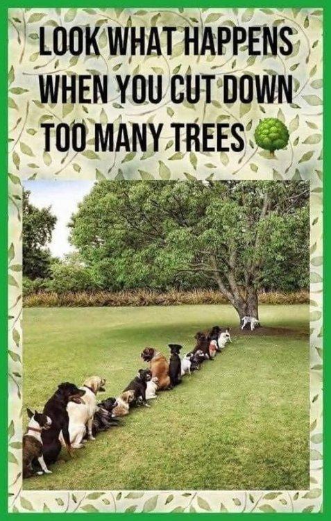 1559236604_Treedogs.thumb.jpg.93092f1fcb643cc4b17c73a3803678d6.jpg